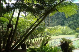 martinique_garden_244