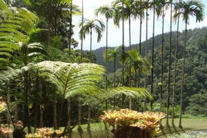 martinique_garden_245