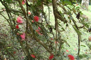 martinique_garden_249