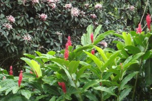 martinique_garden_253