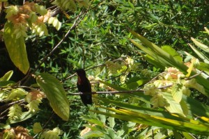 martinique_garden_258